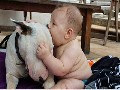 **Cute Bull terrier Dogs and Adorable Babies ~ Funny Dog **