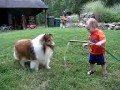 /236b30dba8-baby-and-dog-play-with-hose