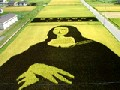 11 Amazing Rice Field Art You Never Want to Miss!