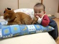 Cute Baby and Cat