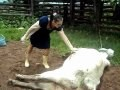 Woman got a kick from a mad cow in her head