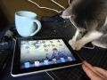 Cute iPad kitteh