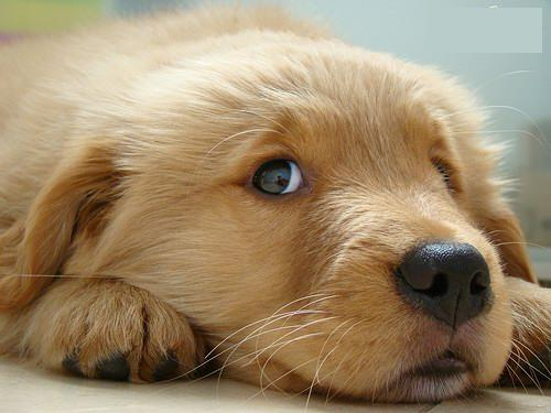 The Most 15 Innocent Puppies Pictures Are Looking at You
