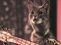 /afedee2bfb-cat-band