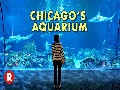 Diving Into Chicago's Shedd Aquarium // One of the World's L