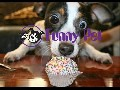 Best Funny Animals Compilation 2015
