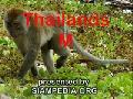 /851f3373fe-monkeys-in-nature-thailand-a-siampedia-clip